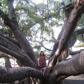 Banyan Tree Park - Landmarks & Historical Buildings ...