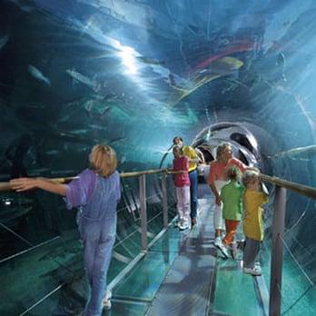Sea Life Centre - 30 Photos & 26 Reviews - Aquariums - Marine Parade ...