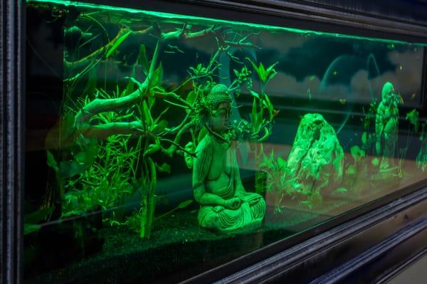 Peaceful stay vaped zen fish tank yelp for Zen fish tank