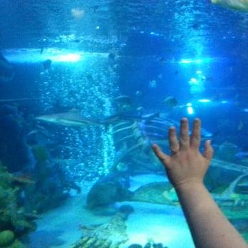 Sea Life Arizona Aquarium 197 Photos Aquariums Tempe