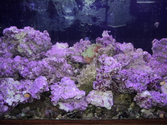 ... Silver Spring, MD, United States. Real Reef cultured purple live rock