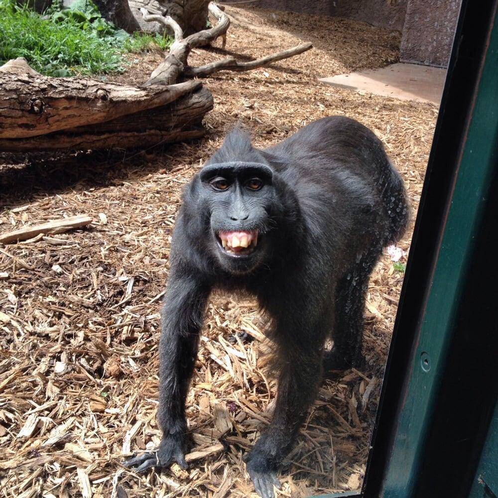Denver Zoo Free Days: Denver, CO