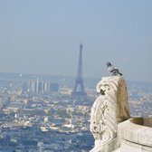 Pigeon's view from top of Sacre Coeur