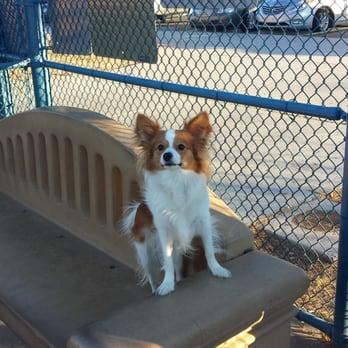 Dog Parks Summerlin Las Vegas Nv