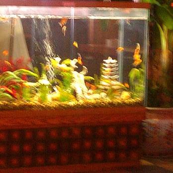 Zen s steakhouse 21 photos japanese restaurants for Zen fish tank