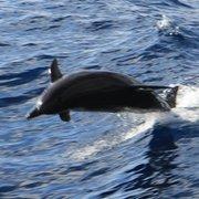 Die Delfine in der Bucht...
