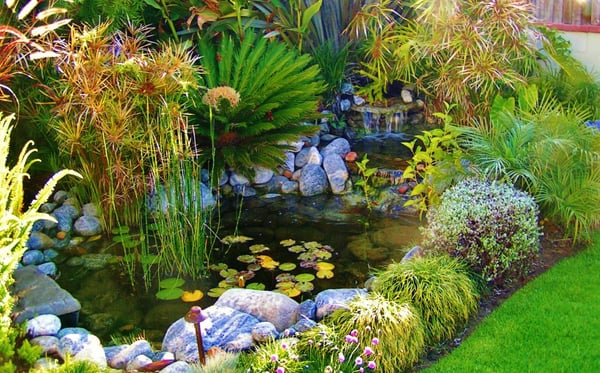 Koi pond water garden paradisse los angeles envirodcape la for Koi pool water gardens thornton