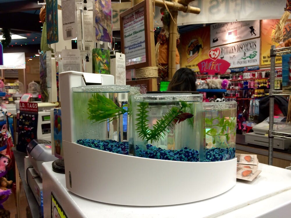 Pet fish food near me tropical pets related keywords for Exotic fish store near me