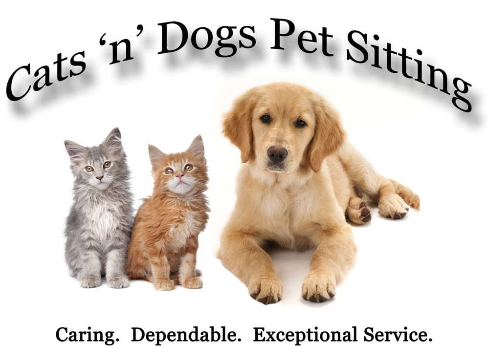 Cats n dogs pet sitting dog walkers south glens for Pet hotels near me