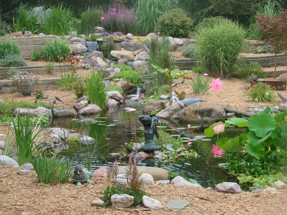 Gorgeous backyard pond complete with plants koi fish and for Water filtering plants for ponds