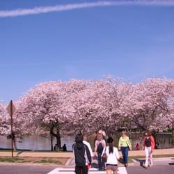 National Cherry Blossom Festival logo