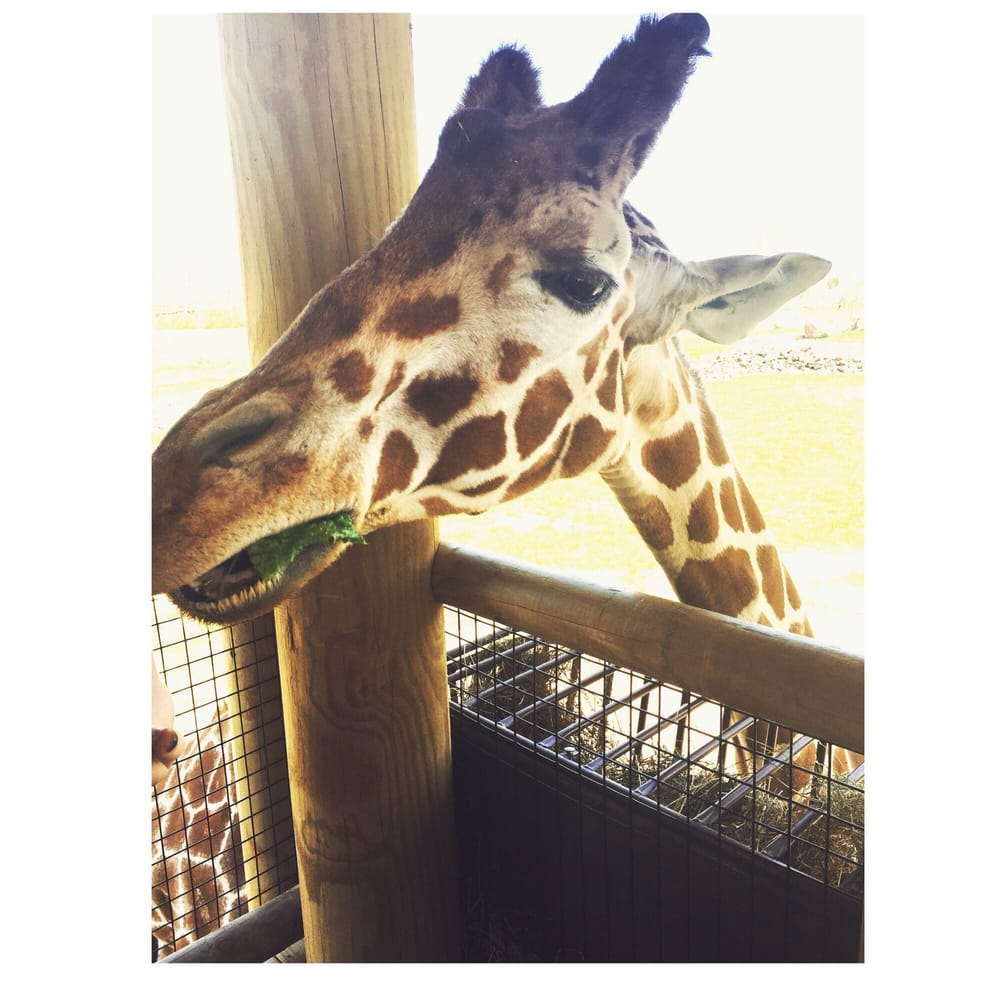 Columbus Zoo Aquarium Zoos Powell Oh Yelp