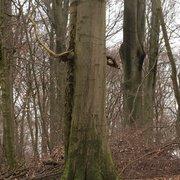 Die Hünenköpfe, Menden, Nordrhein-Westfalen