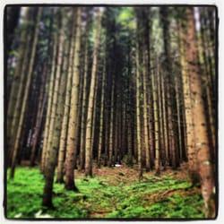 Hausruckwald direkt beim Club