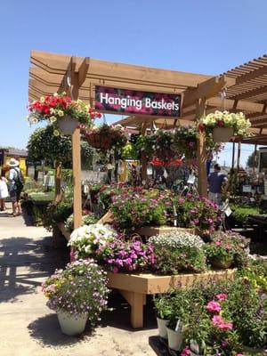 Armstrong Garden Centers 16 Photos Nurseries