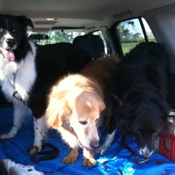 RedRoverDogz - Treat time after a great Safari! - Indianapolis, IN, Vereinigte Staaten