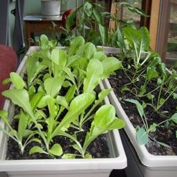 Worm farms of minnesota 19 photos gardening centres for Indoor gardening minneapolis