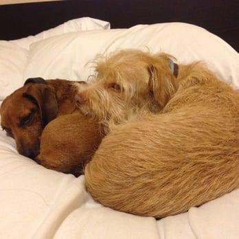 Southern Oregon Humane Society Adoptable Dogs