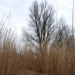 Harriersand Weserinsel, Brake, Niedersachsen