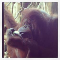 Ninette... Orango di 44 anni!