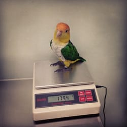The Center For Avian & Exotic Medicine - Ollie getting weighed in - New York, NY, Vereinigte Staaten