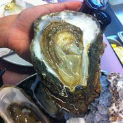 Pieds de Cheval...is this the biggest oyster ever?!?!?