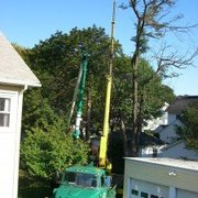 All Seasons Gardening & Landscaping Services - Tree trimming work in San Francisco. - San Francisco, CA, Vereinigte Staaten