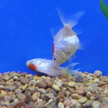 Petco pet training beltsville md reviews photos for Feeder fish petco