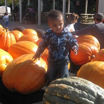 Minooka il pumpkin patch