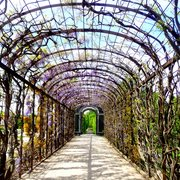 Cool lilac tunnel