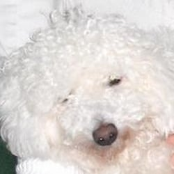 Scrub a dub dogs mobile pet grooming pet groomers marlton nj