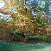 Dappled sunshine highlights autumnal…