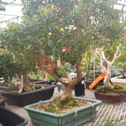 Telly 39 S Greenhouse And Garden Center Bonsai Under Winter Care Troy Mi United States