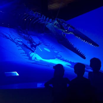 Discount coupons for houston museum of natural science