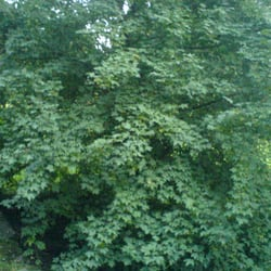 Der Uelzener Stadtwald, Uelzen, Niedersachsen