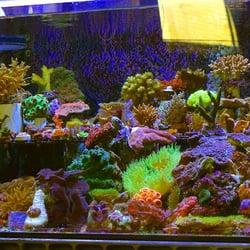 Carson Tropical Fish Pet Stores Hawaiian Gardens Ca
