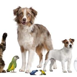 zooplus heeft alles voor honden, katten,…
