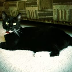 Manteca Animal Shelter Cats