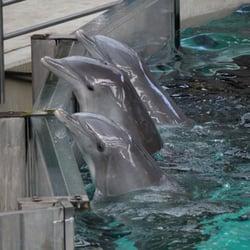 Zoo - Delfinarium - Duisburg, Nordrhein-Westfalen, Deutschland