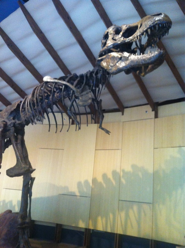 Museum Of Natural History Gastonia Nc