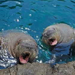 The New York Aquarium Zoos Coney Island Brooklyn Ny