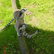 marwell zoo, Winchester, Hampshire