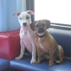 Dog Kennels In Brooklyn Ny