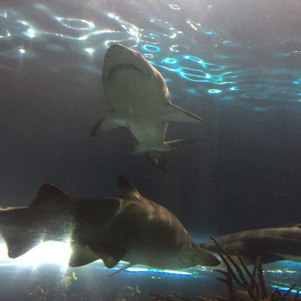 Ripley's aquarium of the smokies gatlinburg tn coupons