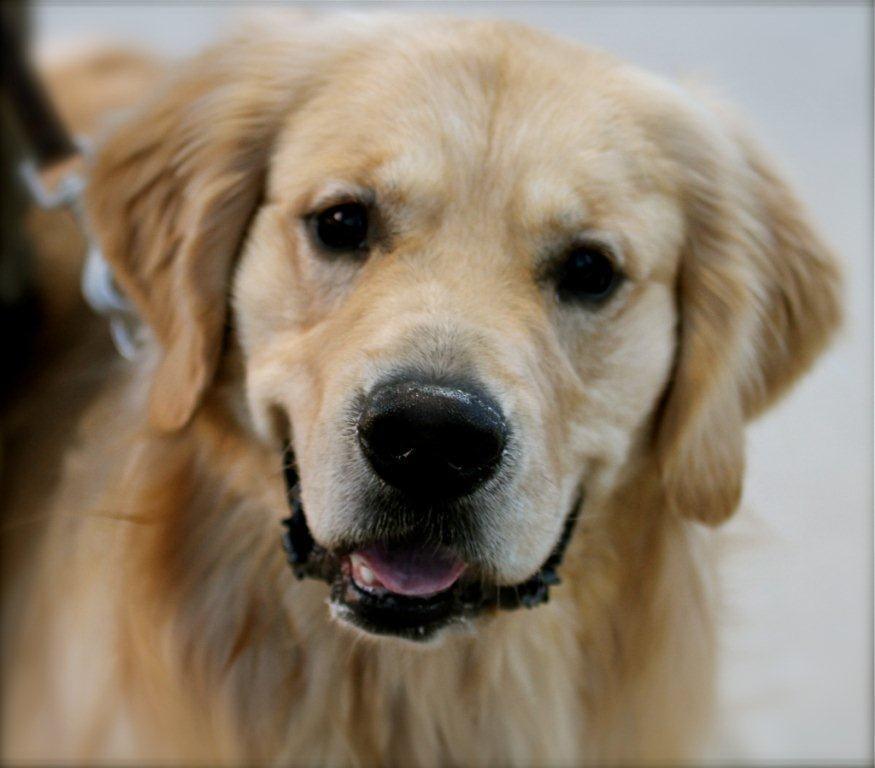 Photos for Colorado Canine Concierge | Yelp