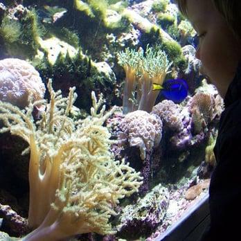 National aquarium closed federal triangle washington for Aquarium washington dc