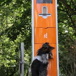 Berliner Stadthunde, Berlin