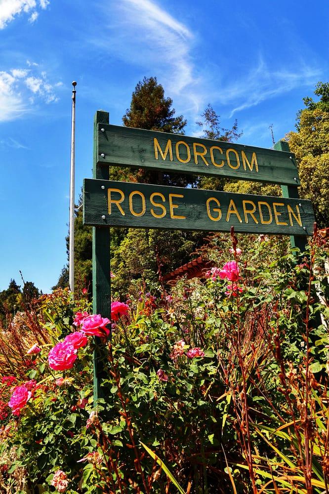 Morcom Municipal Rose Garden Park Forests Oakland Ca United States Yelp