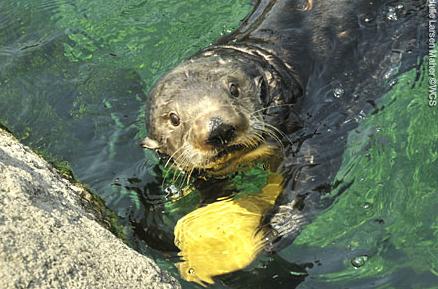 The New York Aquarium 329 Fotos Zoo Coney Island