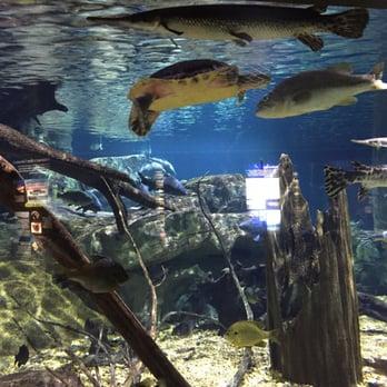 Tennessee Aquarium 276 Photos Aquariums Chattanooga TN